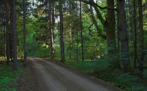 Purviniškių girininkijos miškai